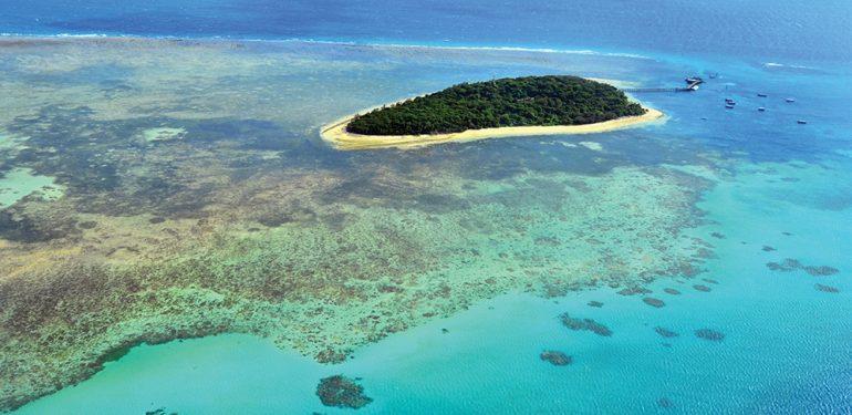 mercan resifleri ile ilgili görsel sonucu